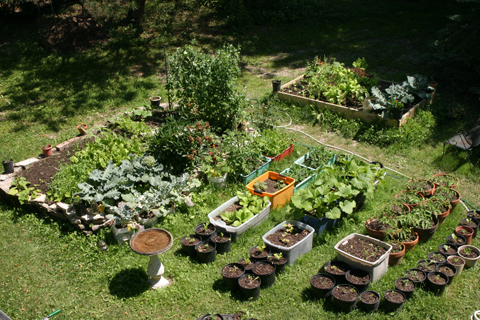 Arile view of the backyard garden, 2009. Image courtesy of Kool Cat.