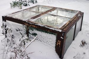 0062 Kale - cold frame