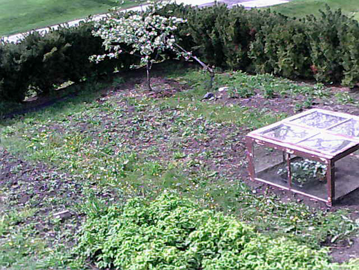 The new garden cam shows the other half of the garden. Notice the cold frame on the right side. Raspberries are growing in the foreground.