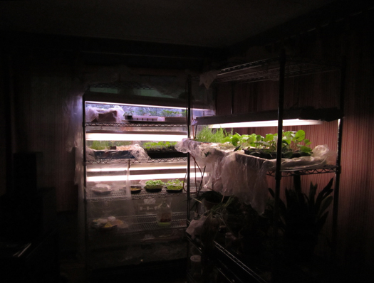 twobitguru.com - Friday Link List - Indoor Greenhouse Photo