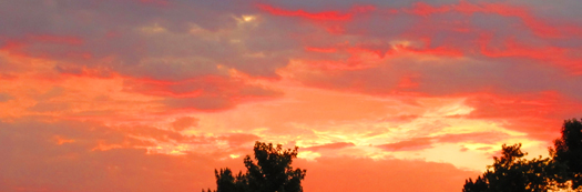 Two-bit Guru - Finding your life's purpose - Photo of red sky and trees at dusk