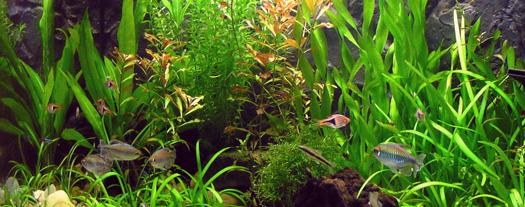 0148 Flow - aquarium-1