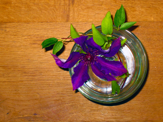 Two-bit Guru | Friday Link List | Photo of a purple flower in a glass on wood