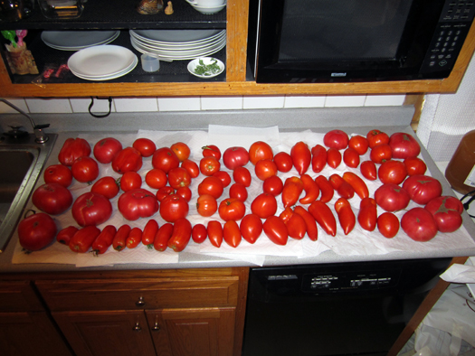 Two-bit Guru - Friday Link List - Photo of a variety of tomatoes spread out on a kitchen counter top - In this week's link list - GMO health problems, urban organic farming, medicine from tree bark, animal bridges, and a free meditation guide.