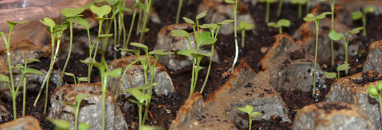 0165 Finding Your Inspiration - Seedlings
