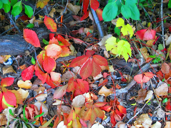 Two-bit Guru | Friday Link List 42 | Photo of leaves in fall.