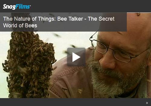 0187 - Bee Talker - FI