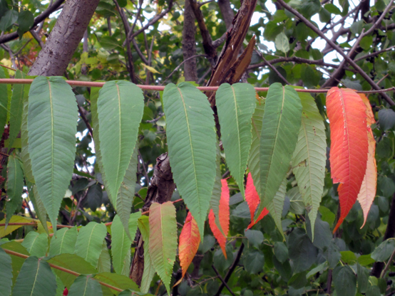 Two-but Guru   Friday Link List   Photo of fall leaves