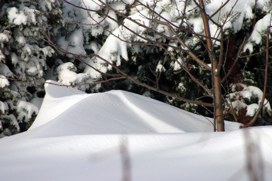 Two-bit Guru | Friday Link List 55 | Photo of a snow drift in front of a hedge.