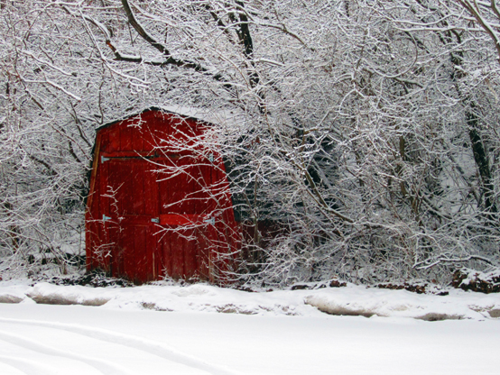 Two-bit Guru | Friday Link List: Green Chicago, Will Allen, TV fog... | Photo of a red shed and snow covered trees.